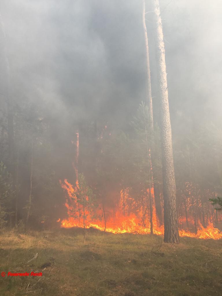 Brand Wald